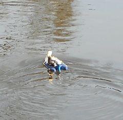 Micro-Schlauchboot in Fahrt